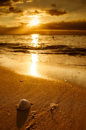 Waves approaching sea shell lying on sand during sunset photo