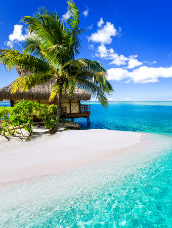 Tropical villa and palm tree next to amazing blue lagoon