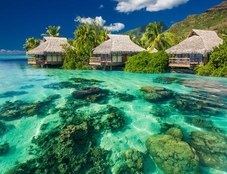 上記の美しく、リゾートで、熱帯の水中のサンゴ風景