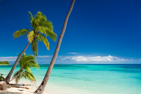 polynesia: Palm trees hanging over deserted tropical beach Stock Photo