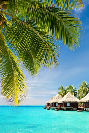 ココナッツ椰子の木のバンガローで熱帯海洋上葉します。 写真素材 - 31793314