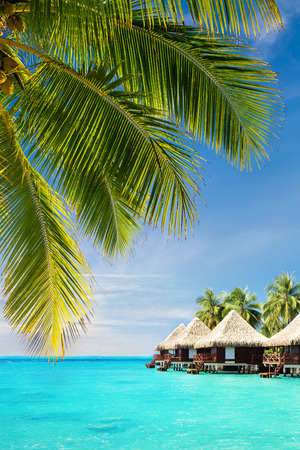 코코넛 야자 나무 방갈로와 열 대 바다 위에 나뭇잎