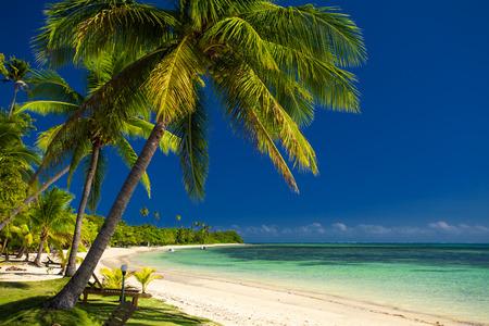 fiji: Palm trees and a white sandy beach at Fiji Islands