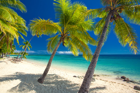 fiji: Deserted beach with coconut palm trees on Fiji Islands