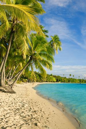 fiji: Palm trees over tropical lagoon at Fiji Islands