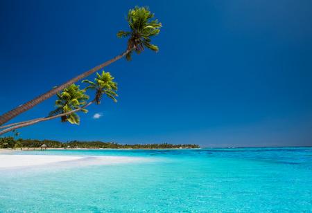 fiji: Few coconut palms on deserted beach of tropical island