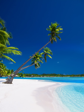 caribbean island: Palm trees hanging over stunning lagoon with blue sky Stock Photo