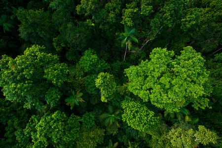Rain forest from air near Kuranda, North Queensland, Australia Stok Fotoğraf