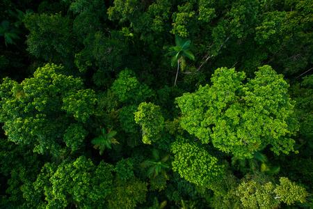Regenwoud vanuit de lucht in de buurt van Kuranda, North Queensland, Australië