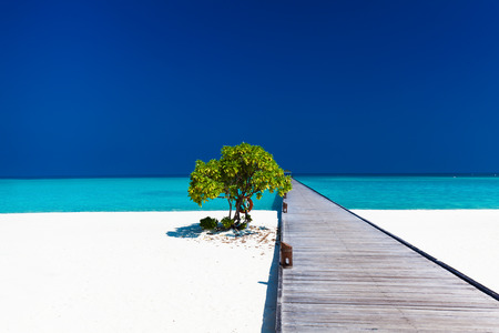 Beautiful beach with wodden jetty and single small tree in Maldives photo