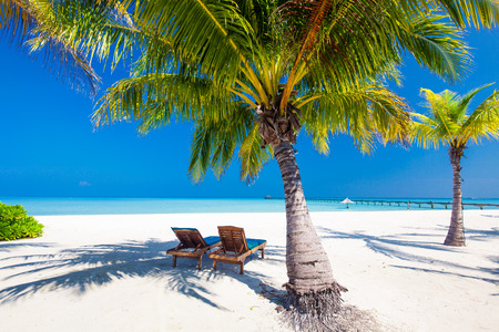Deck chairs under umrellas and palm trees on a tropical beach
