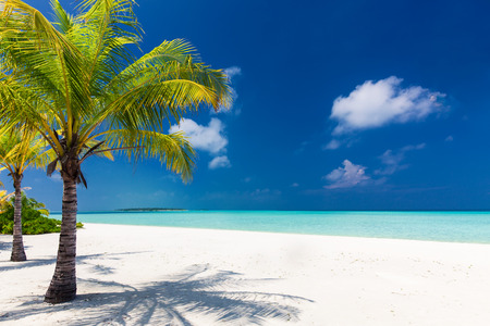 Two palm trees overlooking blue lagoon and white beach, Maldives
