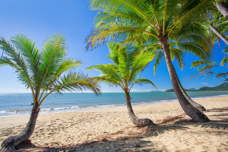 tree fruit: Palm trees at tropical Palm Cove beach in north Queensland, Australia Stock Photo