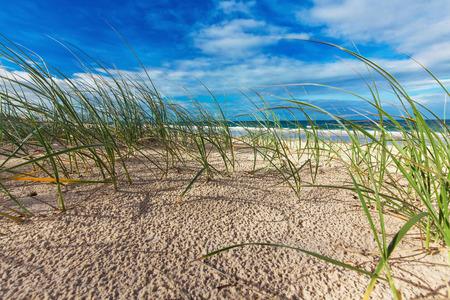 sunshine: Sunny beach with sand dunes grass and blue sky Sunshine Coast Australia Stock Photo