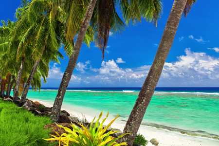 rarotonga: Row of coconut palm trees over the tropical beach of Rarotonga Cook Islands