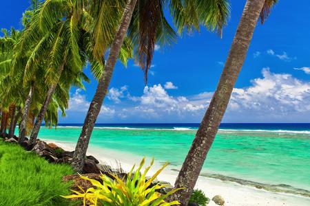 Row of coconut palm trees over the tropical beach of Rarotonga Cook Islands