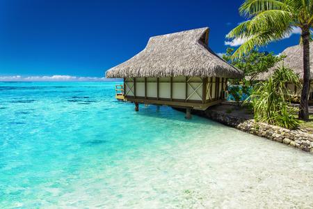 island paradise: Tropical bungalow and palm tree next to amazing blue lagoon onj the island