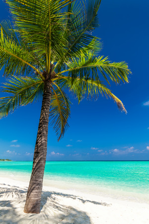 Single coconut palm tree on a tropical beach casting shadow on sand Stock Photo
