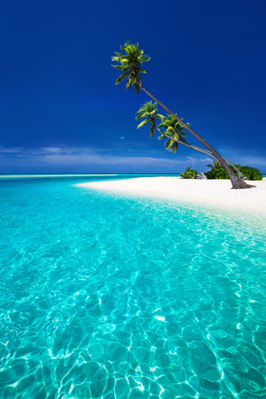 overhanging: Amazing beach on a tropical island with palm trees overhanging lagoon