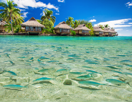 Fish swimming in the tropical lagoon with overwater villas and palm trees