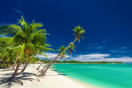 fiji: Tropical beach with coconut palm trees over the lagoon on Fiji Islands