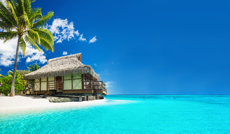 Tropical bungallow on the amazing beach with a palm tree