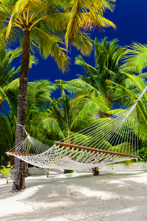 rarotonga: Empty hammock in a shade fo palm trees on Rarotonga, Cook Islands