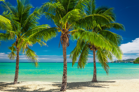 Three palm trees over blue lagoon in Fiji Islands Standard-Bild
