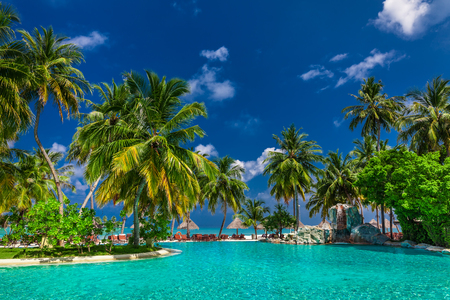 caribbean beach: Large infinity swimming pool on the tropical beach with palm trees and umbrellas