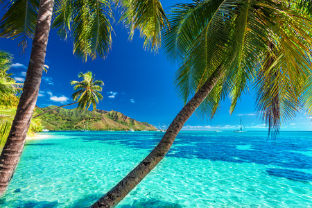Palm trees on a tropical beach with a blue sea on Moorea, Tahiti island Stock Photo
