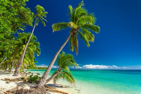 Tropical beach with coconut palm trees on Fiji Islands Stock Photo