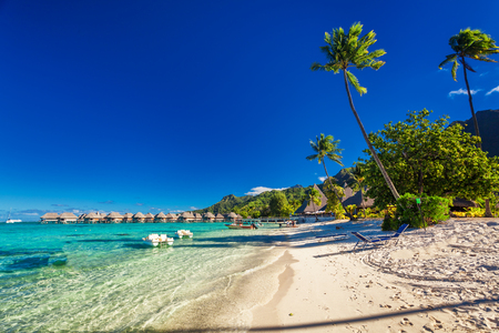 sandy beach: Tropical resort with sandy beach and palm trees on Moorea, French Polynesia