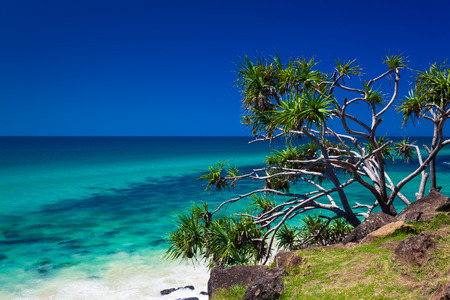 Beach view with a tree in Burleigh Heads National Park, Gold Coast, Australia Stock Photo