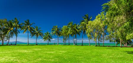 port douglas: Rex Smeal Park in Port Douglas with tropical palm trees and beach, Australia