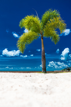 cairns: A lone coconut tree on a tropical beach with a blue sky, Cairns Esplanade, Australia