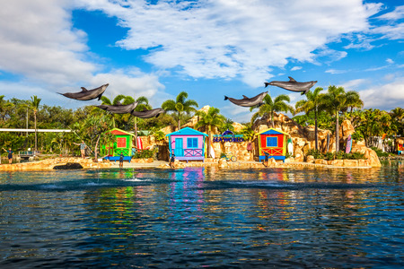 GOLD COAST, AUSTRALIA - MARCH 31, 2015 Dolphin show at Seaworld interacting with people. Multiple doplhins captured at the jamp outside of water.
