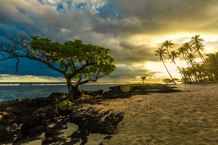samoa: Single tree and coconut palm trees in the sunset on Upolu, Samoa Islands Stock Photo
