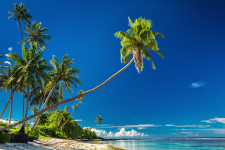 samoa: Tropical beach on south side of Samoa Island with coconut palm trees