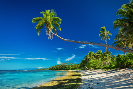 samoa: Tropical beach on south side of Samoa Island with many palm trees Stock Photo
