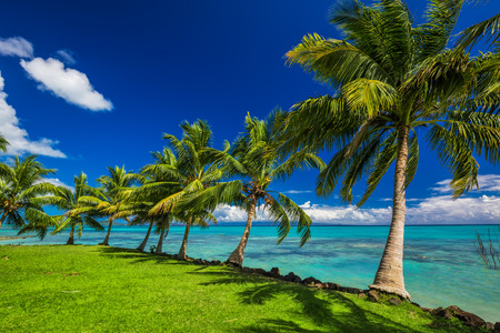 samoa: Tropical beach on north side of Samoa Island with many palm trees