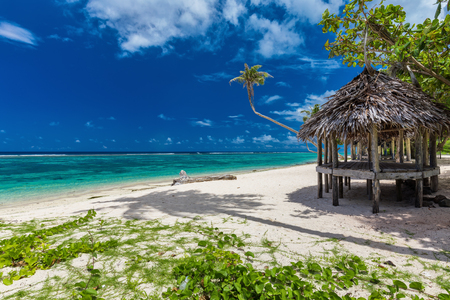 samoa: Tropical vibrant natural beach on Samoa Island with palm tree and fale
