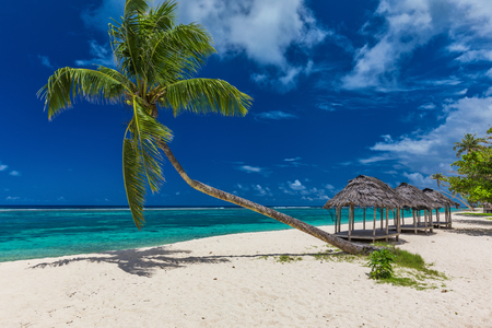 fale: Tropical beach with a single palm tree and a beach fale, Samoa