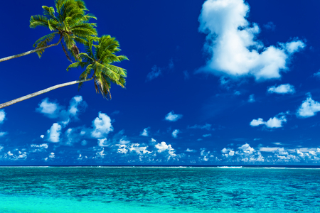 paradise bay: Palm trees on the vibrant beach, tropical Cook Islands, Rarotonga