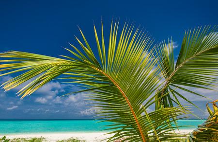 paradise bay: Palm leaf agains blue sky with sea and tropical sandy beach Stock Photo