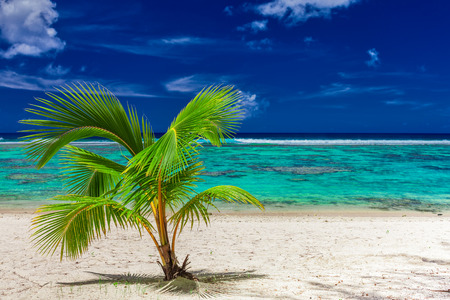 Small palm tree on a sandy Rarotonga beach with coral reef, Cook Islands Stock Photo