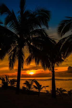Beach palms sihouetted and vibrant sunset, Rarotonga, Cook Islands