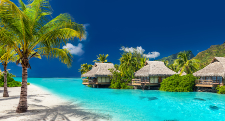 Perfect holiday location on a tropical island with palm trees and amazing vibrant beach Stok Fotoğraf