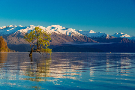 The famous Lonely tree of Lake Wanaka and snowy Buchanan Peaks, South Island, New Zealand Stok Fotoğraf