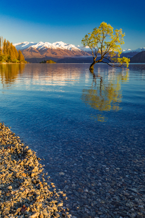 The famous Lonely tree of Lake Wanaka and snowy Buchanan Peaks, South Island, New Zealand Stock Photo