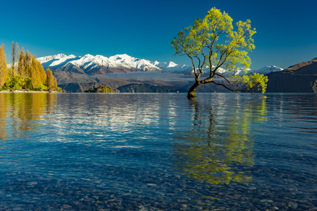 The famous Lonely tree of Lake Wanaka and snowy Buchanan Peaks, South Island, New Zealand Фото со стока